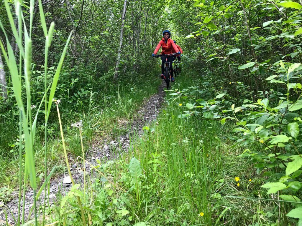 Mountain Biking Voss Forest Outdoor Norway 3