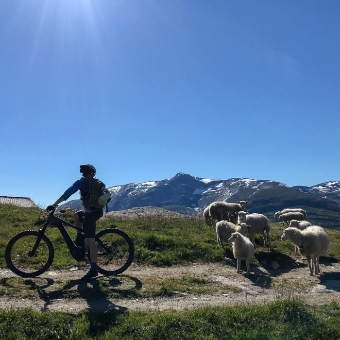 3 Things to Look Forward to in Voss for Nature Lovers