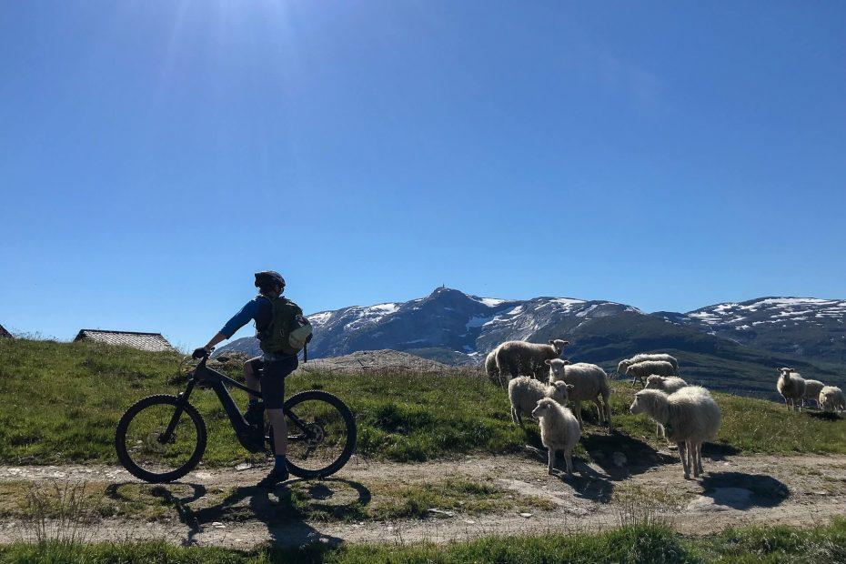 Mountain bike i Norge